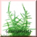 Green-Line: Green-Protect 500ml